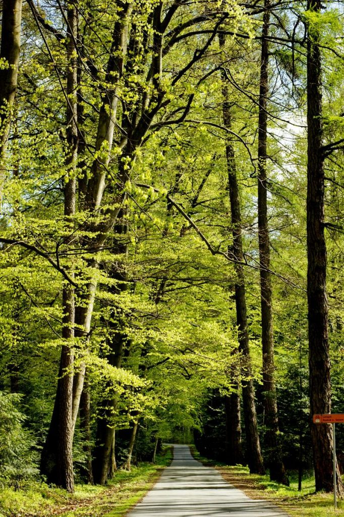 Sooner-Than-Later-Green-Trees-image