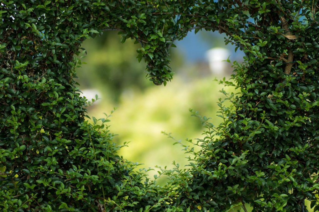 Sooner-than-Later-green-eco-friendly-heart-image